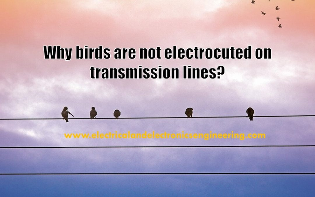Why birds are not electrocuted on power lines